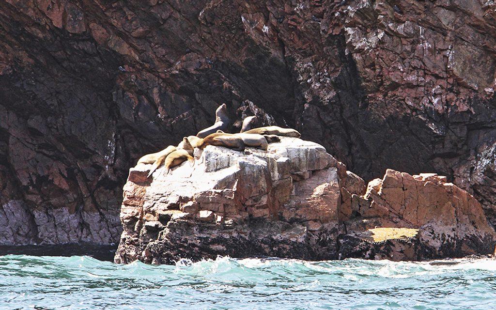 paracas-ballestas-islands