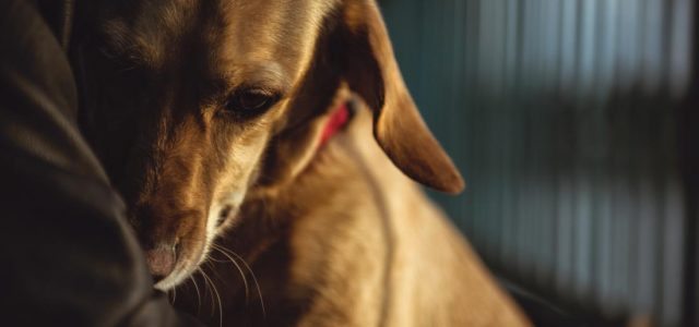 Why pet antibiotics could make their owners sick