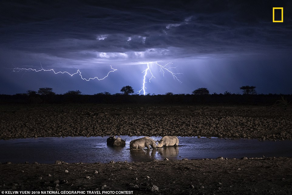Photographer Kelvin Yuen captured this shot of a group of rhinos drinking in a watering hole on a thundery night during his first trip to Africa. He said: 'I captured over 10,000 photos to get this shot and show the relationship between nature and wildlife'