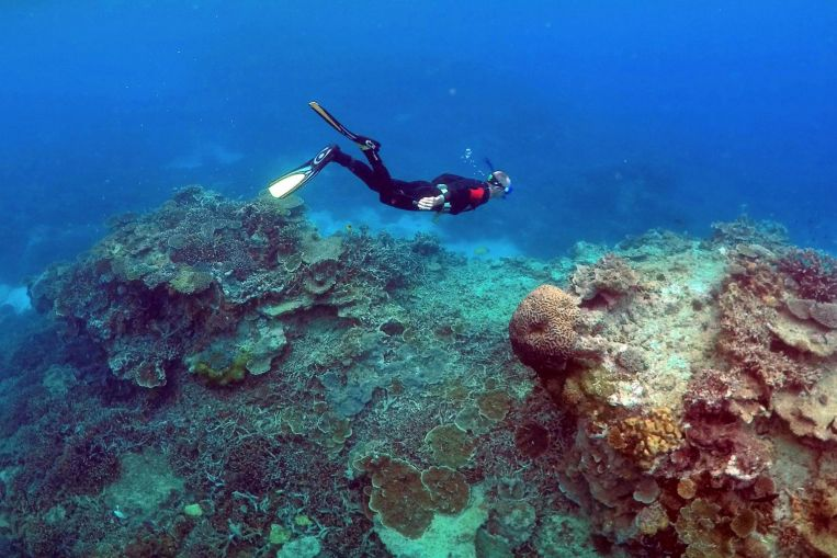 Hawaiian 'Super Corals' Offer a Glimmer of Hope That Dying Reefs Across the World