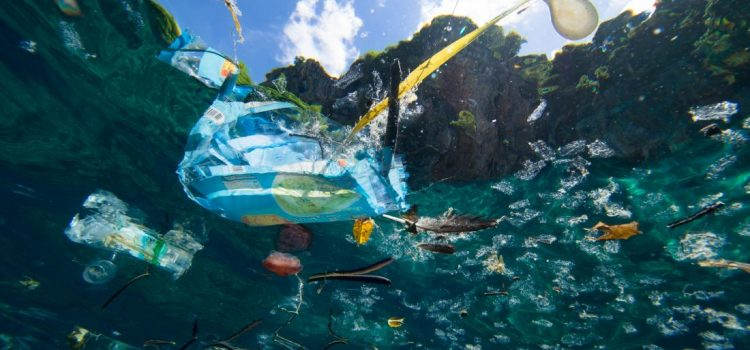 Did You Know That Plastic Polluting The World's Oceans Is Negatively Affecting The Oxygen Levels That These Bacteria Produce