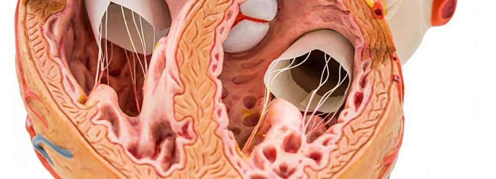 A New Study Investigates Calcium and Heart Disease