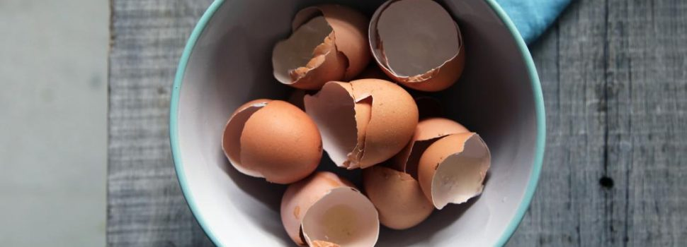 Researchers Have Found an Innovative Way of Using Eggshells to Support New Bone Tissue Growth